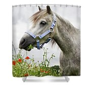 Lulu In The Poppy Field Shower Curtain