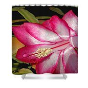 Luminous Cactus Flower Shower Curtain