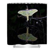 Luna Moth And Reflection Shower Curtain