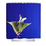 Luna Moth In Flight Shower Curtain