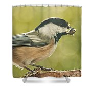 Lunch Time Shower Curtain