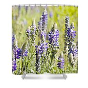 Lupine 2 Shower Curtain