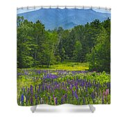 Lupine In Sugar Hill New Hampshire Shower Curtain