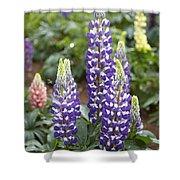 Lupine Lupinus Sp Flowers Shower Curtain