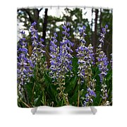 Lupine Patch Shower Curtain