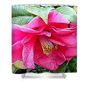 Luscious Pink Hdr Shower Curtain