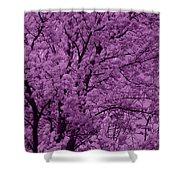Lush Lavender Shower Curtain