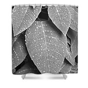 Lush Leaves And Water Drops 2 Bw Shower Curtain