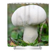 Lycoperdon Shower Curtain