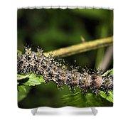 Lymantria Dispar Gypsy Moth Larva Shower Curtain