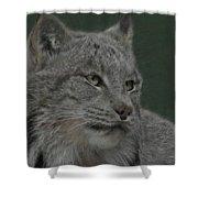 Lynx Painterly Shower Curtain