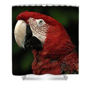 Macaw In Red Shower Curtain