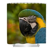 Macaw Parrot Stare Down Shower Curtain
