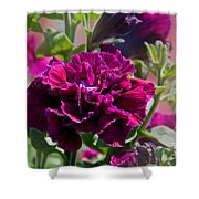 Maco Petunia Flower Double Burgundy Madness Art Prints Shower Curtain