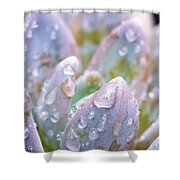 Macro Succulent With Droplets Shower Curtain