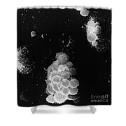 Macrophages Interacting With Lymphocytes Shower Curtain