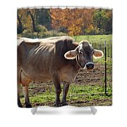 Mad Cow Tail Swish Shower Curtain