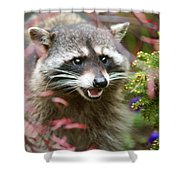 Mad Raccoon Shower Curtain