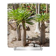 Madagascar Palms Shower Curtain