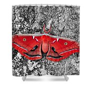 Madam Moth - Red White And Black Shower Curtain