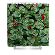 Madder Geophila Repens Fruiting Shower Curtain