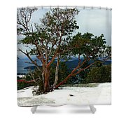 Madrone On Young Hill Shower Curtain