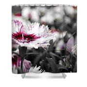Magenta Flower Shower Curtain