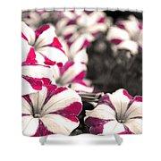 Magenta Flowers Shower Curtain