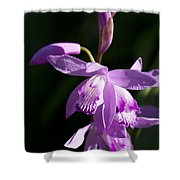 Magenta Hardy Chinese Orchids - Bletilla Shower Curtain