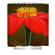 Magenta Zinnia Flower Shower Curtain