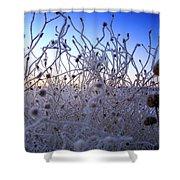 Magic Winter Morning Shower Curtain