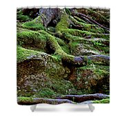 Magical Roots At Sabbath Day Shower Curtain