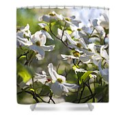 Magical White Flowering Dogwood Blossoms Shower Curtain