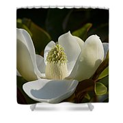 Magnificent Alabama Magnolia Blossom Shower Curtain