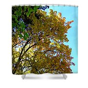 Magnificent Maples Shower Curtain