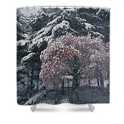 Magnolia Blossoms And Conifers Shower Curtain