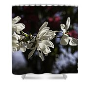 Magnolia Blossoms. Shower Curtain