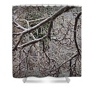 Magnolia Tree Branches Covered With Ice No.3834 Shower Curtain