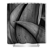 Maguey Caress Shower Curtain