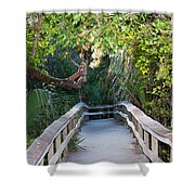 Mahogany Hammock Shower Curtain by Kenneth Albin