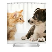 Maine Coon Kitten And Mongrel Dog Shower Curtain