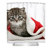 Maine Coon Kitten Shower Curtain