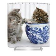 Maine Coon Kittens Shower Curtain