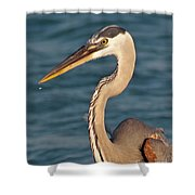 Majestic Great Blue Heron Shower Curtain