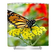 Majestic Monarch Shower Curtain