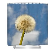 Make Another Wish Shower Curtain