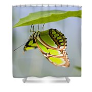 Malachite Butterfly On Leaf Shower Curtain