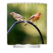 Male And Female House Finch Shower Curtain