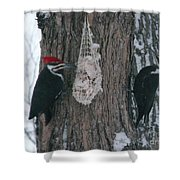 Male And Female Pileated Woodpeckers Shower Curtain