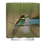 Male Bee Eater Leaves Perch To Find Shower Curtain